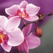 Доставка цветочной продукции