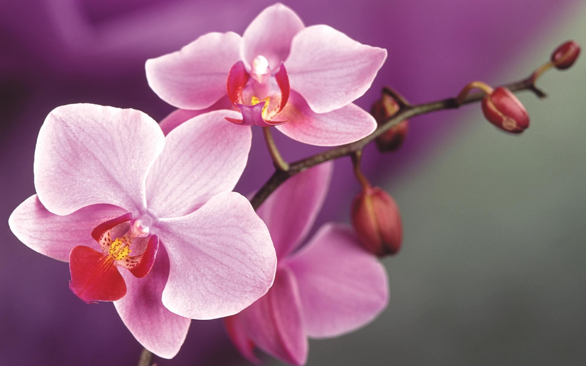 Цветы с доставкой в москве